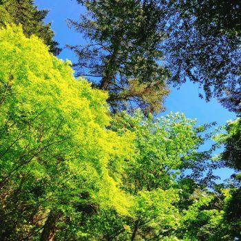 新緑の高尾山